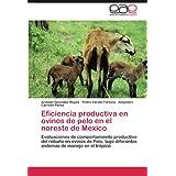 Eficiencia productiva en ovinos de pelo en el noreste de Mexico: Evaluaciones de comportamiento productivo del...