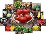 Survival Culinary Vegetable Garden Seeds Non-GMO Non-Hybrid 16 Varieties Preparedness Seeds