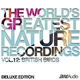 British Birds - Young Blackcap Bird Sounds (Nature Sounds)