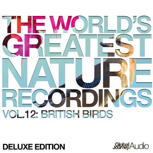 British Birds - Barn Owl (Nature Sounds)
