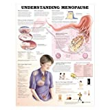 Understanding Menopause Anatomical Chart Laminated
