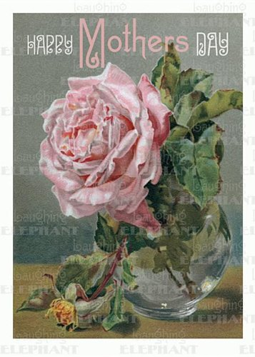 Pink Rose in Vase - Mother's Day Greeting Card