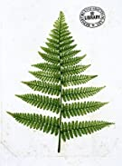 Fern, by William Bradbury and Millet Evans (V&A Custom Print)