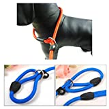 ChineOn Adjustable Nylon Dog Pet Rope Slip Training Leash Pet Collar Traction Rope(Blue)
