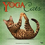 Yoga Cats 2014 18-Month Calendar (Multilingual Edition)