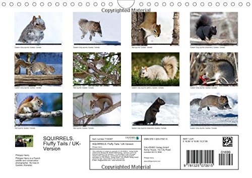 SQUIRRELS / UK-Version (Wall Calendar 2016 DIN A4 Landscape): Fluffy Tails in the Woods (Monthly calendar, 14 pages) (Calvendo Animals)