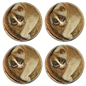 Coasters slow loris monkey on tree IN thailand Image 36743713 by MSD Round Coaster (4 Piece) Set Cup Mat Mug Can Water Bottle Drink Customized Stain Resistance Collector Kit Kitchen Table Top Desk by MS Depot [並行輸入品]