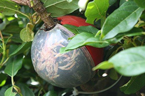 cutting-globe-plant-propagator-2-medium-piece-set-grow-roots-on-plant-cuttings-in-as-few-as-8-weeks-
