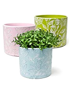 "Set 3 Terracotta 4"" Leaf Leaves Motif Planter Flower Pots Assorted Bright Colors"