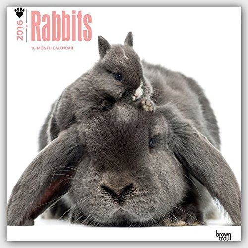 Rabbits 2016 Wall