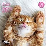 Nouvelles Images 79003020 Calendrier 2017 Chats 16 mois 14,5 x 14,5 cm...