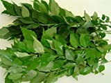 Fresh Curry Leaves (Hawaii) 1 Oz
