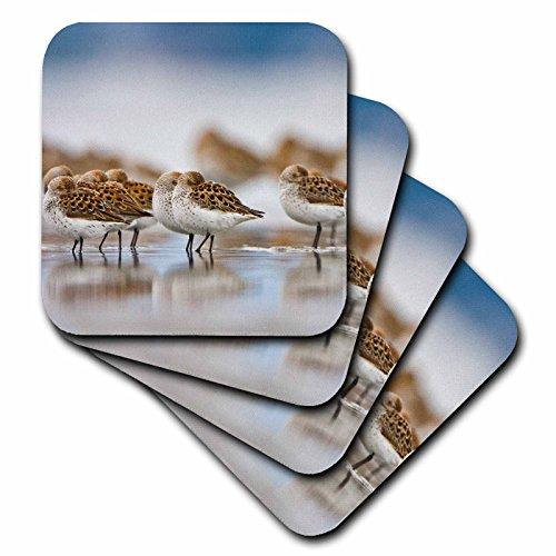3dRose cst_95654_4 WA, Bottle Beach, Grays Harbor, Western Sandpiper Birds-US48 GLU0121-Gary Luhm-Ceramic Tile Coasters, Set of 8