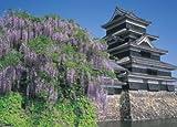 500ピース 藤咲く松本城