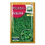 【緑肥】ダイカンドラ 小袋(約20ml)