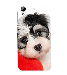 Cute Puppy with Red heart 3D Hard Polycarbonate Designer Back Case Cover for HTC Desire 626 :: HTC Desire 626 Dual SIM :: HTC Desire 626S :: HTC Desire 626 USA :: HTC Desire 626G+ :: HTC Desire 626G Plus