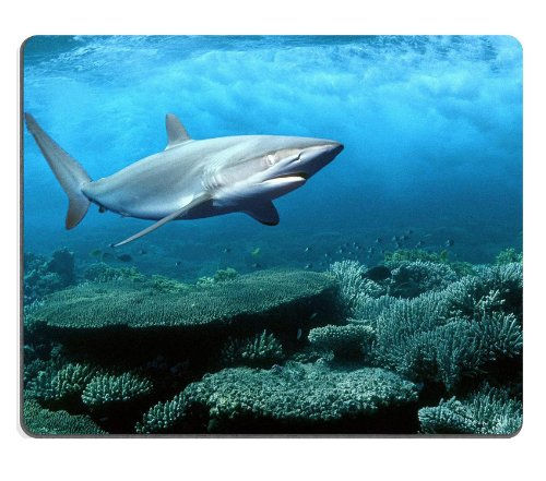Great White Shark Swimming In Ocean Mouse Pads Customized Made To Order Support Ready 9 7/8 Inch (250Mm) X 7 7/8 Inch (200Mm) X 1/16 Inch (2Mm) High Quality Eco Friendly Cloth With Neoprene Rubber Msd Mouse Pad Desktop Mousepad Laptop Mousepads Comfortabl front-368300