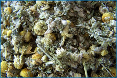 Sloth Green Tea by Felicitea ~ Custom blended to ease your stomach and your mind! Large Size!