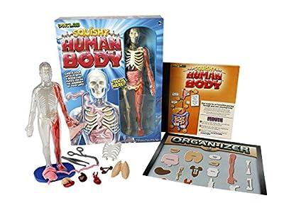 Smart Lab Squishy Human Body
