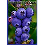 Blueberries in Your Backyard: How to Grow America's Hottest Antioxidant Fruit for Food, Health, and Extra Money...