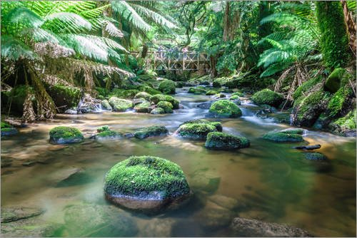 impresion-en-metacrilato-120-x-80-cm-river-in-the-green-rainforest-of-tasmania-australia-de-matteo-c