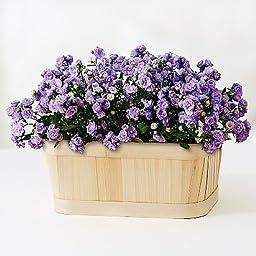 Joy N Joy Flowers Canterbury Bells Garden - Theshopstation Online Fresh Flowers Plants - Wedding Flowers - Birthday Flowers - Send Flowers - Flower Arrangements - Floral Arrangements - Plants Bouquets