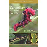 Caterpillars of Eastern North America: A Guide to Identification and Natural History (Princeton Field Guides) ~ David L. Wagner