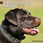 Chocolate Lab Retriever 2013 Wall Cal...