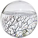 EcoSphere Closed Aquatic Ecosystem, X-Large Sphere