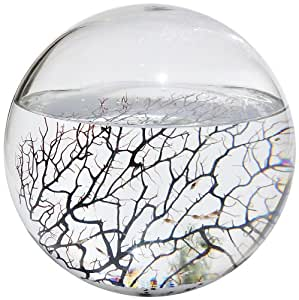 Amazon.com : EcoSphere Closed Aquatic Ecosystem, X-Large Sphere : Pet ...