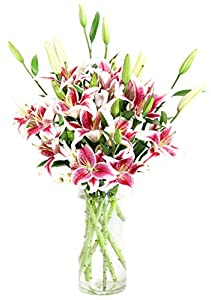 Stargazer Lily Bouquet (8 stem, 20 blooms) - With Vase