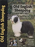 Ann Arch Old English Sheepdog (PetLove)