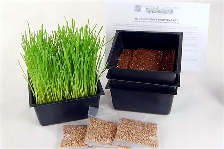 Mini Organic Pet Grass Kit -3 Pack- Grow Wheatgrass for Pets: Dog, Cat, Bird, Rabbit, More - Includes Trays, Soil, Wheat Grass Seeds, Instructions by Wheatgrass Kits (Wheatgrass Kit Organic compare prices)