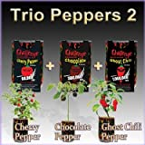 Nature's Greeting Grow Your Own Peppers (All-In-One Trio Pack: Ghost Chili + Chocolate Pepper + Cherry Pepper)