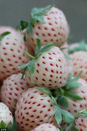 Seedville strawberries seeds