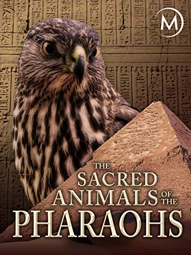 The Sacred Animals of the Pharaohs
