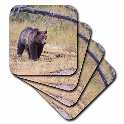 Grizzly Bear Gifts And Collectibles Kritters In The Mailbox