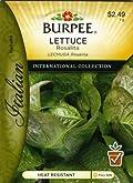 Burpee 69616 Italian - Lettuce, Head Rosalita Seed Packet
