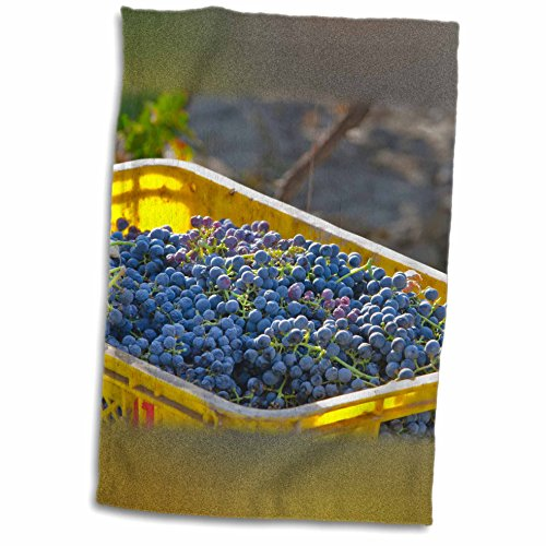 3drose-danita-delimont-grapes-cabernet-sauvignon-grapes-from-a-vineyard-china-12x18-towel-twl-208794