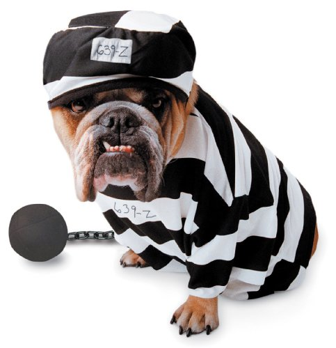 Paper Magic Group Zelda Prisoner Pet Costume