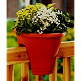 VGreen Balcony Riling Plant Red Color (Set Of 2)