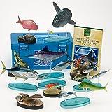 立体図鑑リアルフィギュアボックス ソルトウォーターフィッシュ (日本の海水魚)