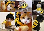 Small Bumblebee Dog Cat Puppy Hallowe...