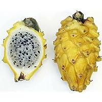 Yellow Dragon Fruit - Hylocereus megalanthus - Pitaya/Strawberry Pear - 4