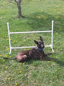 Single Adjustable Jump Dog Agility Equipment (No tape, Economy)