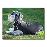 Pawtech Soft Shell All Season Dog Jacket