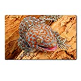 Table Mats Closeup of a Tokay Gecko Gecko gecko Image 36246969 by MSD Customized Tablemats Stain Resistance Collector Kit Kitchen Table Top DeskDrink Customized Stain Resistance Collector Kit Kitchen Table Top Desk