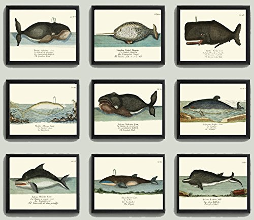 whale-art-print-set-of-9-antique-beautiful-ocean-sea-marine-nature-colored-natural-science-chart-ill