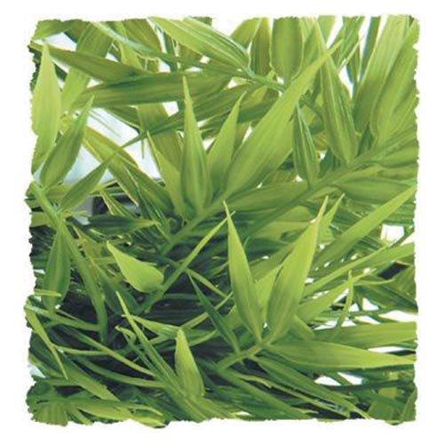 Zoo-Med-BU-36-Cannabis-Kunststoffpflanze-Large-Dekoration-und-Versteckmglichkeit-im-Terrarium