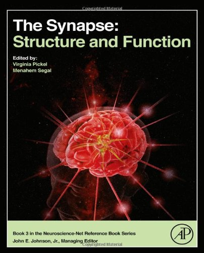 The Synapse: Structure And Function (Neuroscience-Net Reference)
